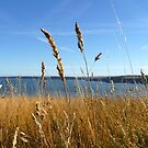 Scarborough Cliff Top - Grass by mcworldent