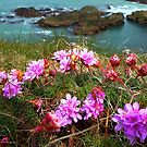 Sea Pink On A Cornish Cliff-top by mcworldent