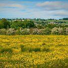 June Meadow by Colin Metcalf