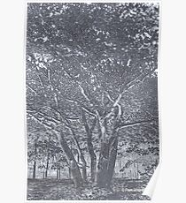 A Tree in HDR Poster