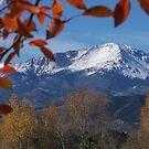 The Peak by Jody Johnson