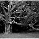 Champion Oak Monochrome by Wayne King