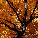 Colors of Fall by Hallie Duesenberg