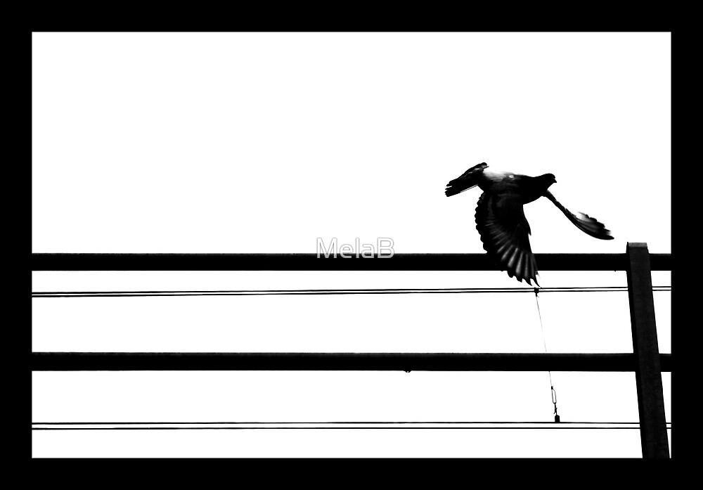 Escape by MelaB