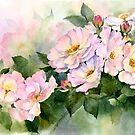 Rambling Rose by artbyrachel