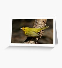 Warbler, Wilson's Greeting Card