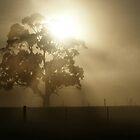 A frosty morning by Rosie Appleton