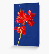 Primary Colors of Khalo Greeting Card