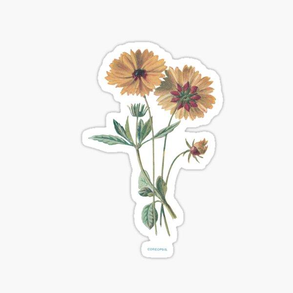 Coreopsis Print, Original Flower Print, Botanical Antique, Antique print, Coreopsis Wall art, Coreopsis Flower, Botanical Prints Sticker