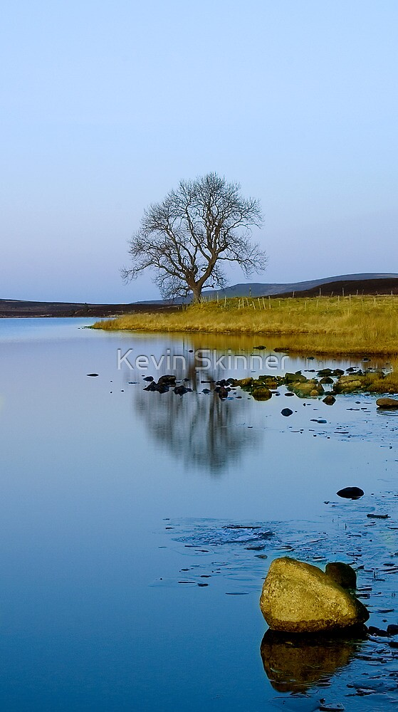 Lochindorb - Tree At Dusk by Kevin Skinner
