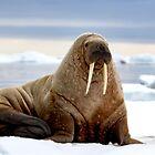 I Am the Walrus by Marylou Badeaux