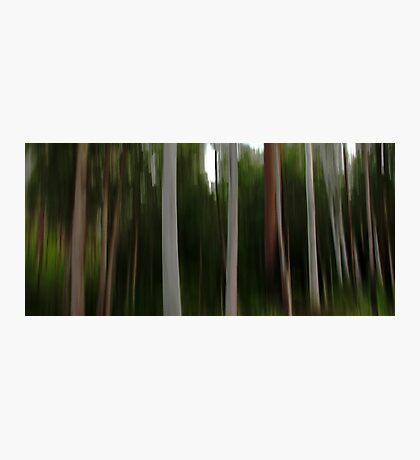 Forest of the Eucalypts Photographic Print