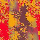 Banksia by indiafrank