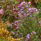 Prairie Flower Bouquet   by Adam Kuehl