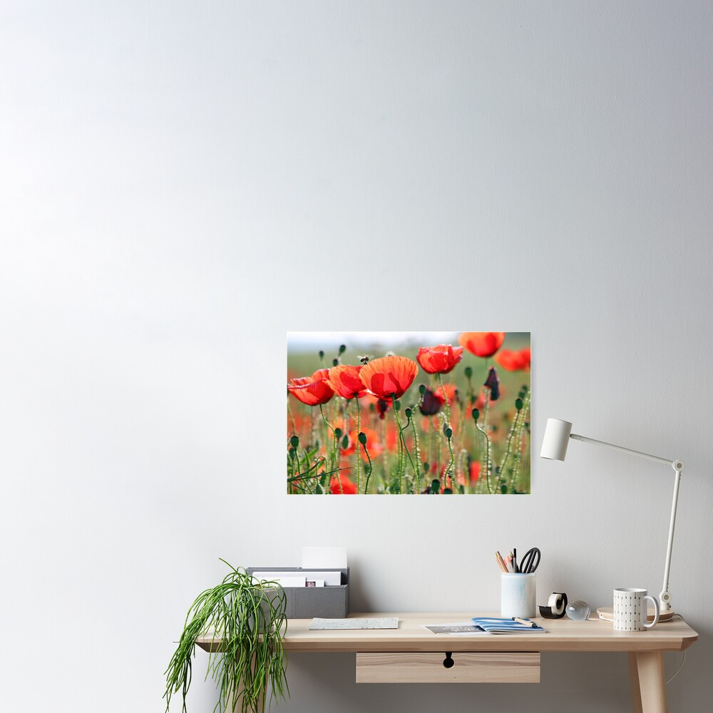 bee and poppies flower spring season Poster