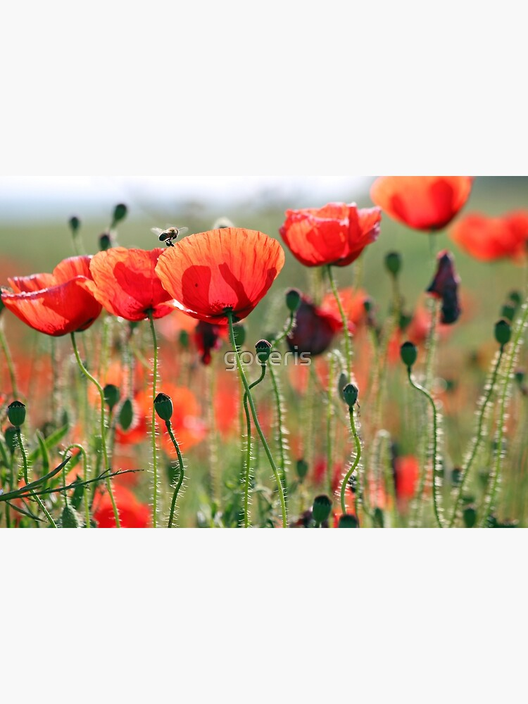 bee and poppies flower spring season by goceris