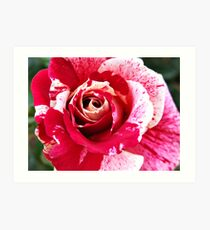 Red Pink Rose Flecked Art Print