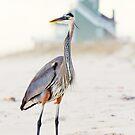 Heron and The Beach House by Jonicool