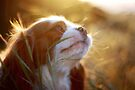lucy in the sun by Anthony Mancuso