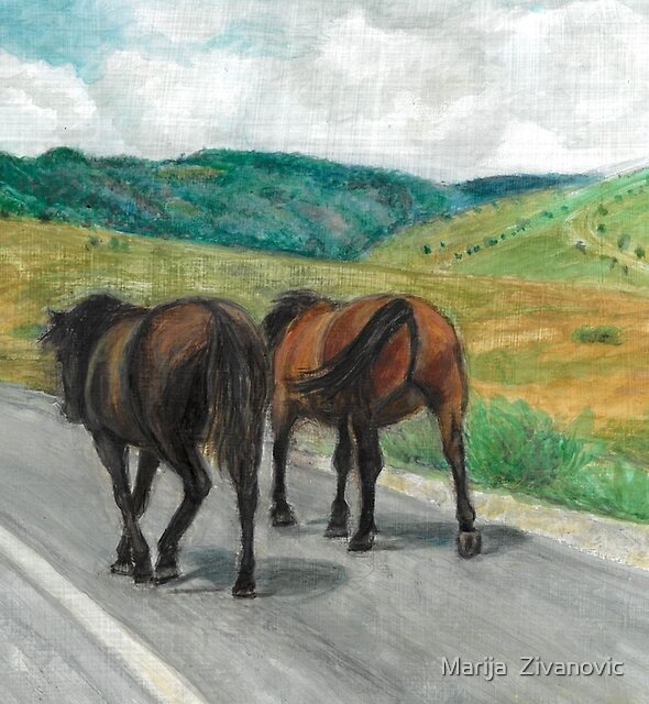 Wild horses on the road by Marija  Zivanovic