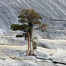 Standing Tall - Pywiack Dome, Yosemite National Park, Mariposa County, CA by Rebel Kreklow