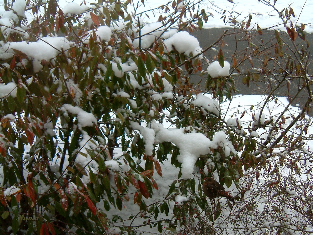 Winter Arrived by Ilunia Felczer
