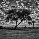 A Black and White Morning by TJ Baccari Photography