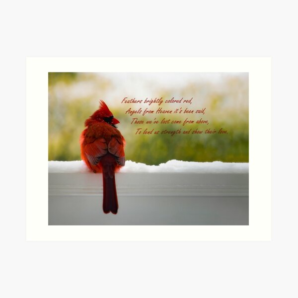 Male Cardinal - Visitor From Heaven quote Art Print
