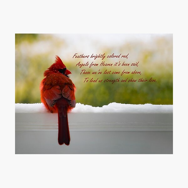 Male Cardinal - Visitor From Heaven quote Photographic Print