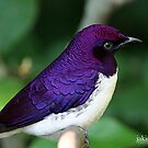 purple starling by jaki good