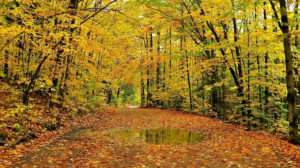 Golden Canopy by Nancy Barrett