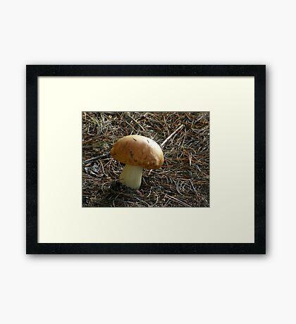 The Perfect Mushroom Framed Print