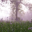 lavender morning by irishgirl7