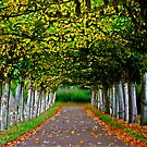 tree-lined walk by Uwe Rothuysen