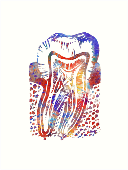 Tooth, Watercolor Tooth, Tooth anatomy\