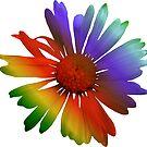 wunderschöne, bunte Margerite, Blume, Regenbogen von rhnaturestyles