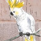 Cockatoo  by Michele Meister