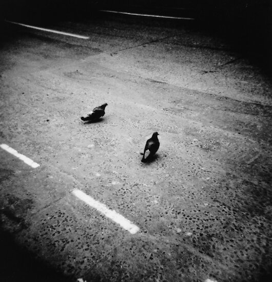 Lonely pigeons in London by Mattias Olsson