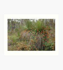 Nature's Decorators - Kennedia coccinea, Coral Vine Art Print