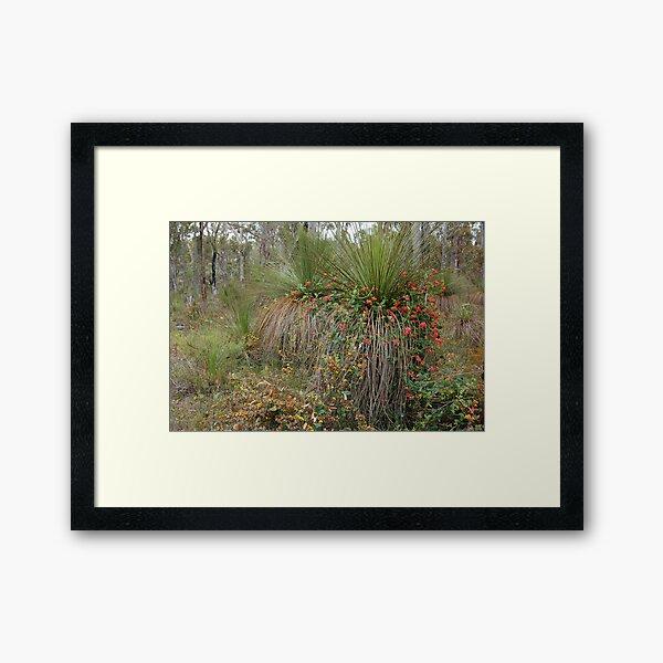 Nature's Decorators - Kennedia coccinea, Coral Vine Framed Art Print