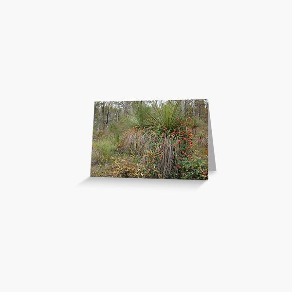 Nature's Decorators - Kennedia coccinea, Coral Vine Greeting Card