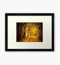 The Golden Pathway Framed Print