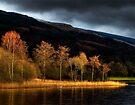 Winter Sun Loch Ard by David Mould