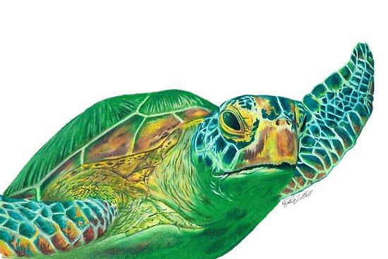 Pósters Tortuga De Mar Verde Dibujo A Lápiz De Color De