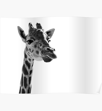 Giraffe Expressionism Poster