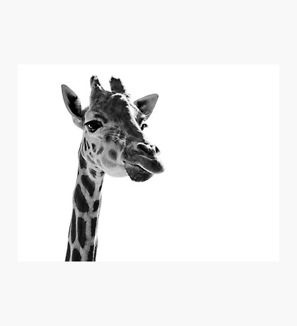Giraffe Expressionism Photographic Print