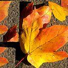 Broken Leaves by Linda Miller Gesualdo