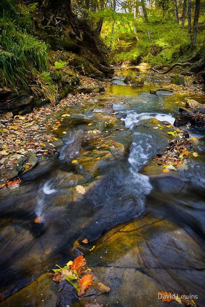 Autumnal Woodland Stream by David Lewins