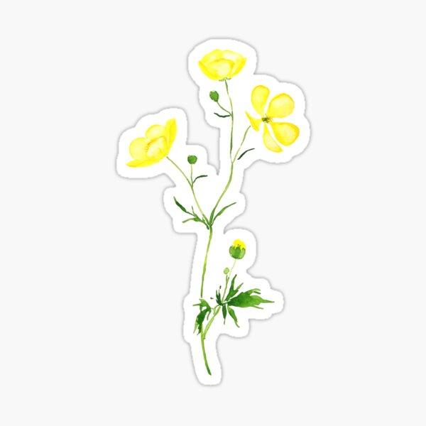 yellow buttercup flower watercolor  Sticker