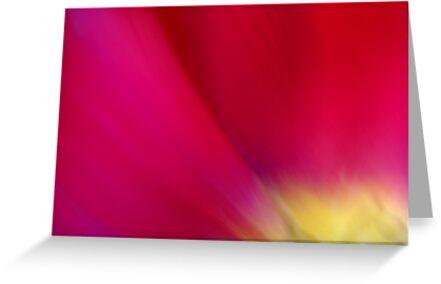 Tulip Sunrise by Kitsmumma